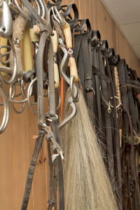 horse bridles hanging on a tack room wall