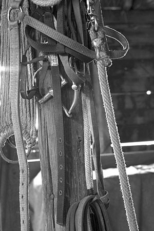 horse tack hanging in a horse barn